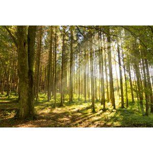 Forestal